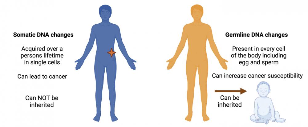 somatic versus germline changes